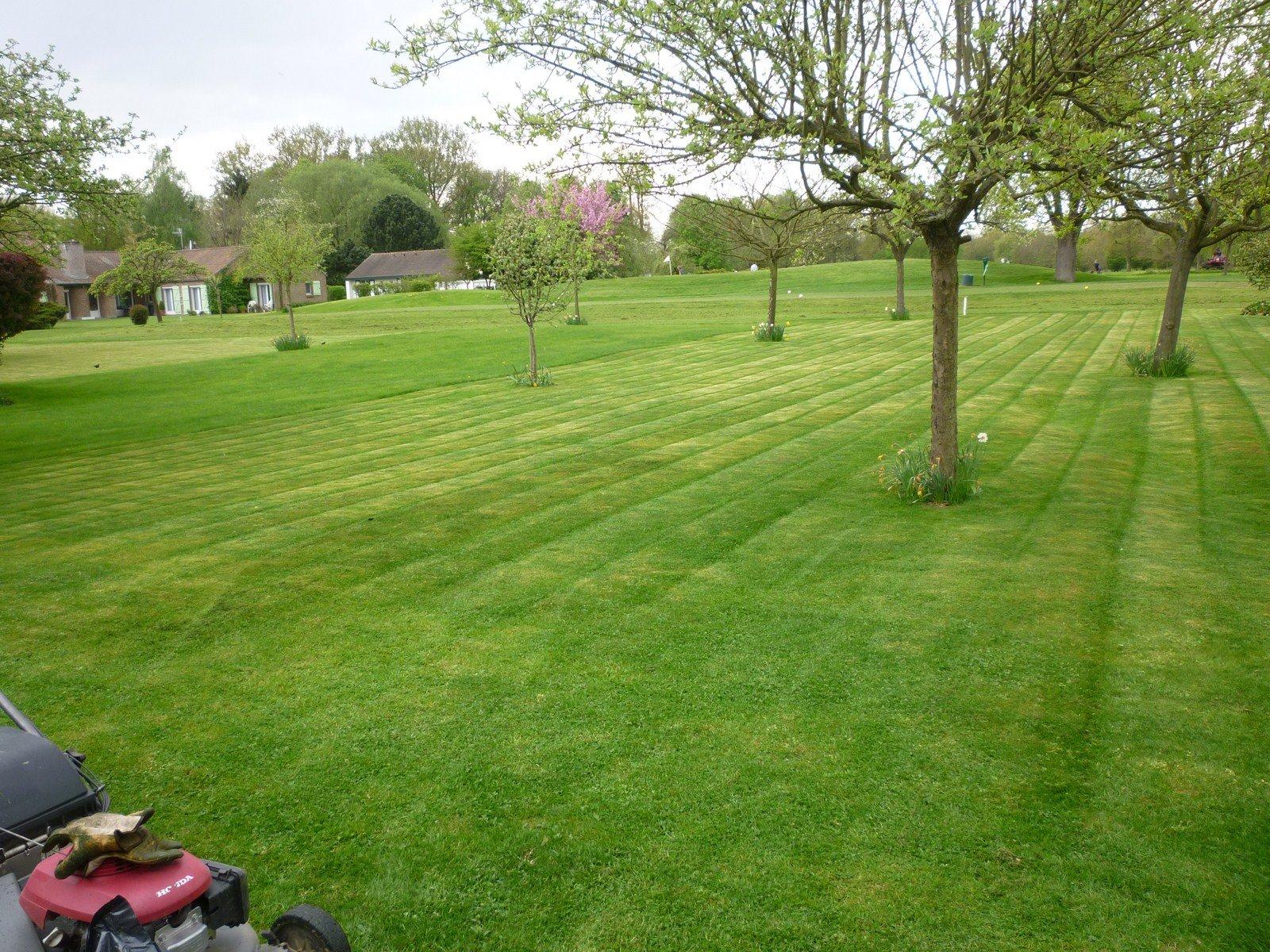 Tonte de pelouse jardin de 2000m2 savoir faire services for Jardin service