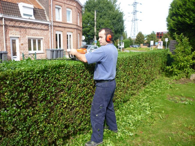 Taille des troènes, arbustes, tonte de la pelouse… · Savoir faire ...