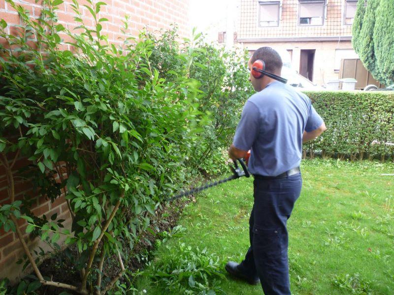 Taille des tro nes arbustes tonte de la pelouse for Service de tonte de pelouse