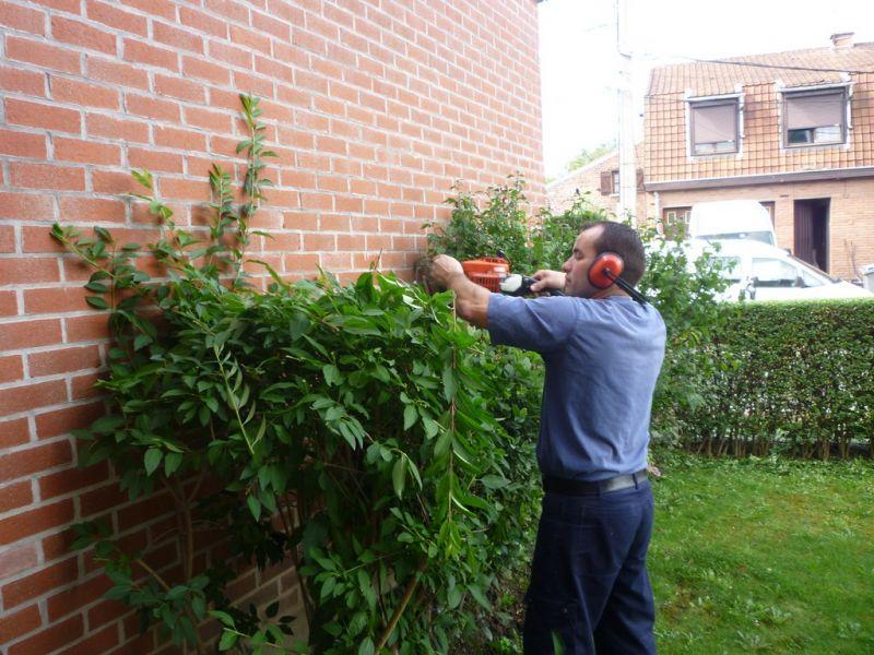 Taille des tro nes arbustes tonte de la pelouse for Recherche tonte pelouse